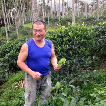 Mr. Li in his heritage assamica tea garden in Sun Moon Lake, Taiwan