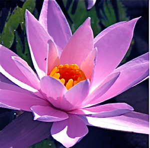Lavender Lotus Flower