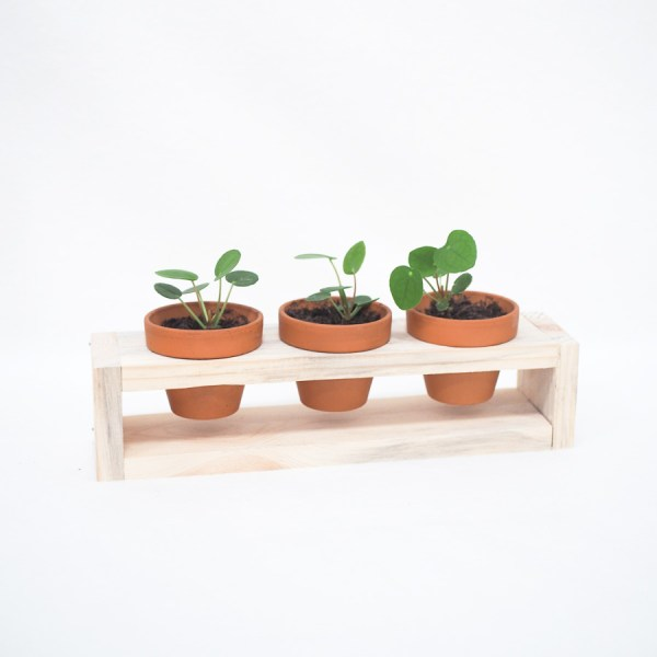 Plantenrekje - 3 potjes
