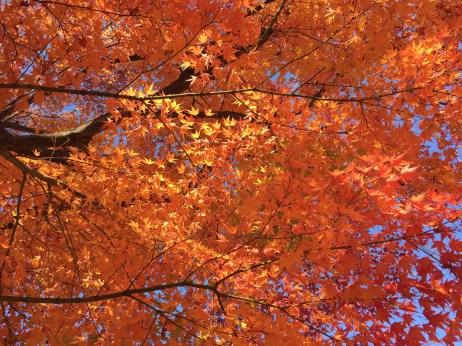 霞城公園の紅葉