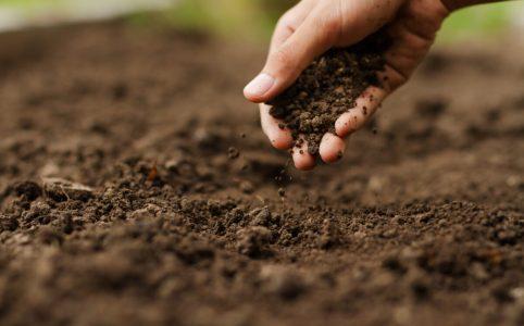 蒔いた種に手で土を被せている様子
