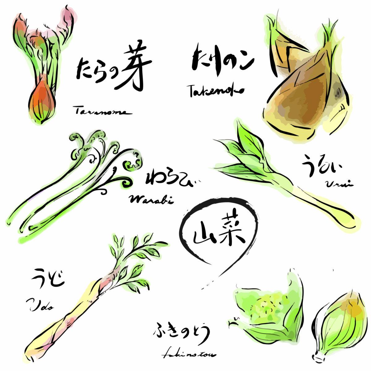 山菜セットのイラスト:タラの芽、タケノコ、わらび、うるい、うど、ふきのとう