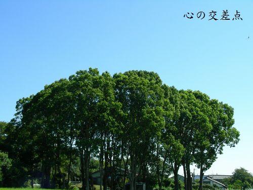 夏風と散歩