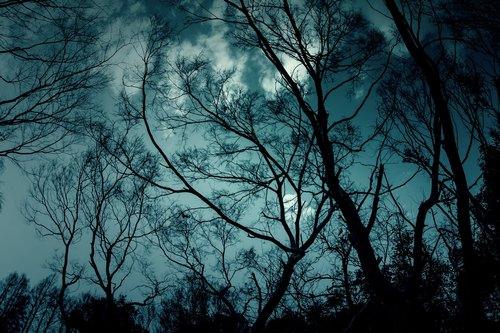 暗闇にそよぐ風