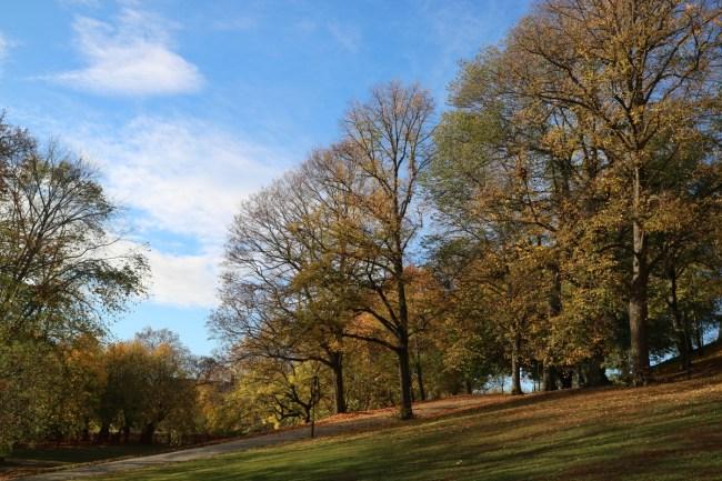 Herfst in Vitabergsparken, Stockholm