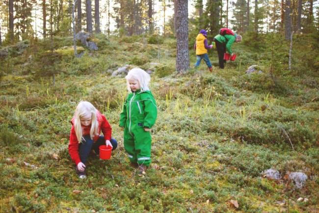 Picking berries in Northern Sweden - Kristiina Kontoniemi/Folio/imagebank.sweden.se