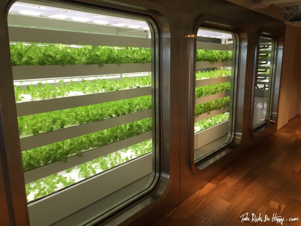 Itoya Lettuce Farm, Ginza