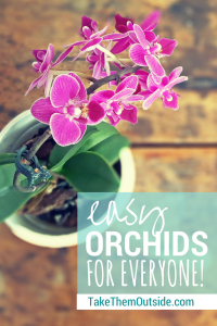 Super helpful article on how to grow orchids | #orchids #houseplants #indoorgardening