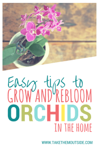 How to grow and rebloom orchids | #hourseplants #orchids #flowers