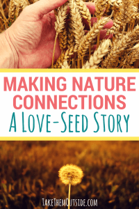 a close up of a hand through wheat and a photo of a dandylion in seed. text reads making nature connections, a love-seed story