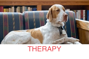 therapy-dog_300x200_STRIPE