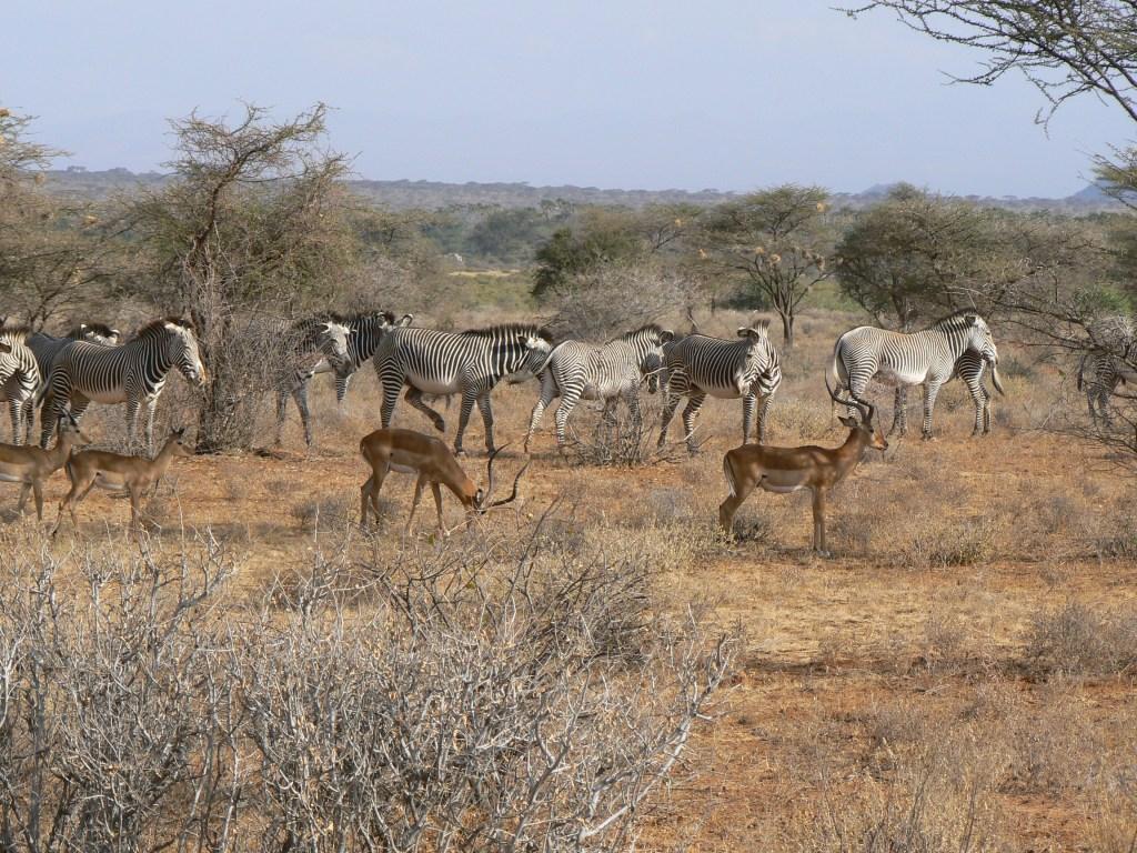 Safaris met bestemming Aanbiedingen