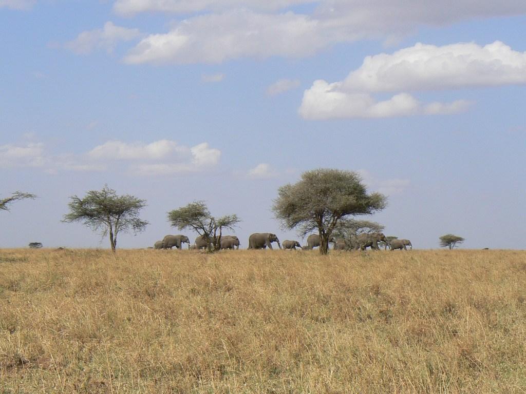 Safaris met bestemming Serengeti NP