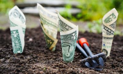 money-growing-dirt