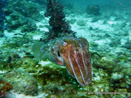 wicked diving review cuttlefish taking to the open road peggy tee