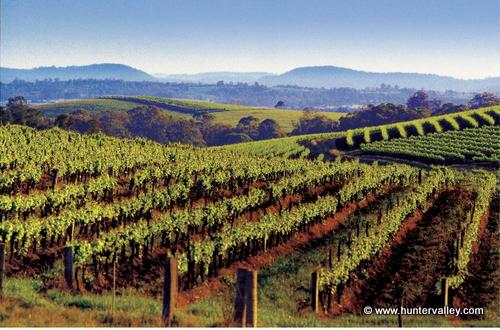 day trips from sydney hunter valley vineyard taking to the open road peggy tee huntervalley