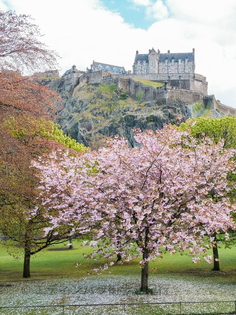 桜が咲く頃までには…