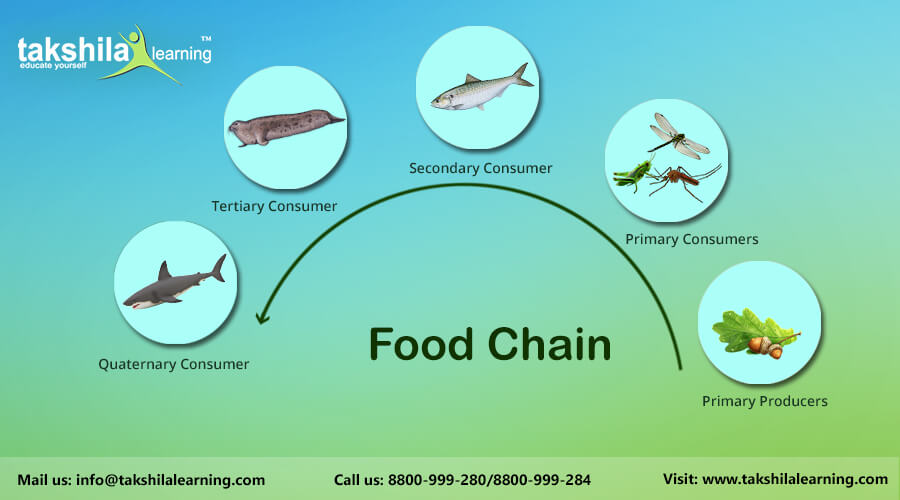 What Is Food Chain Cbse Science Online And Video Classes