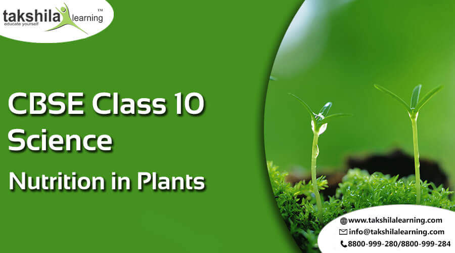 NCERT Solutions for Class 10 Science Nutrition in Plants