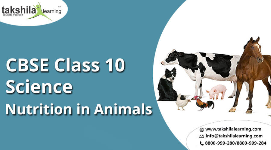 Nutrition In Animals Important Notes Of Ncert Cbse Class 10 Science