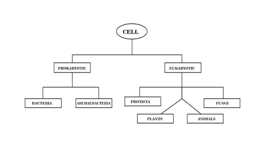 Important Topic Biology Class 11 Notes And Solutions Types Of Cell