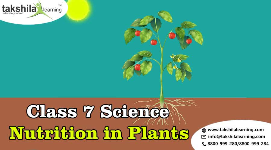 CBSE & NCERT Solutions for Class 7 Nutrition in Plants