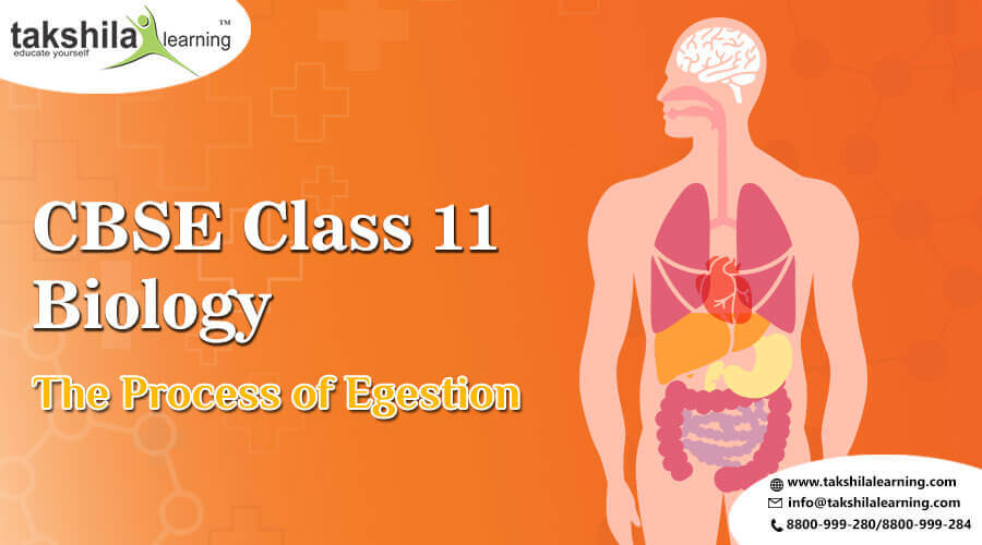 Digestion and Absorption - The Process of Egestion | NCERT Solutions for Class 11 Biology