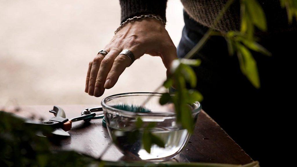 TAKUMI lifestyle | avvicinarsi all'ikebana