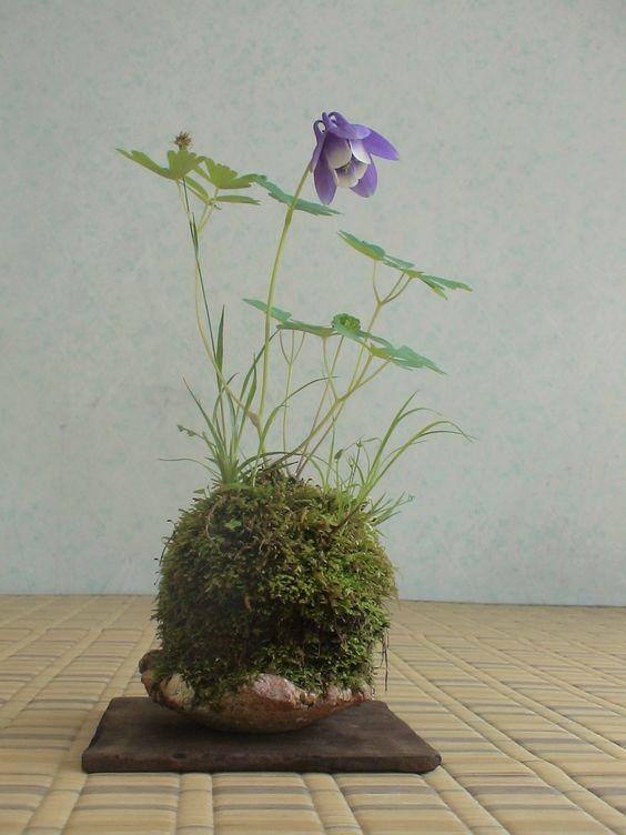 TAKUMI lifestyle   Kokedama 4