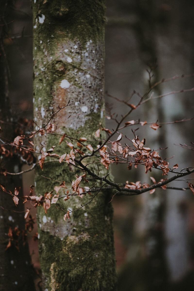 TAKUMI lifestyle - l'equilibrio armonico della natura © Annie Spratt