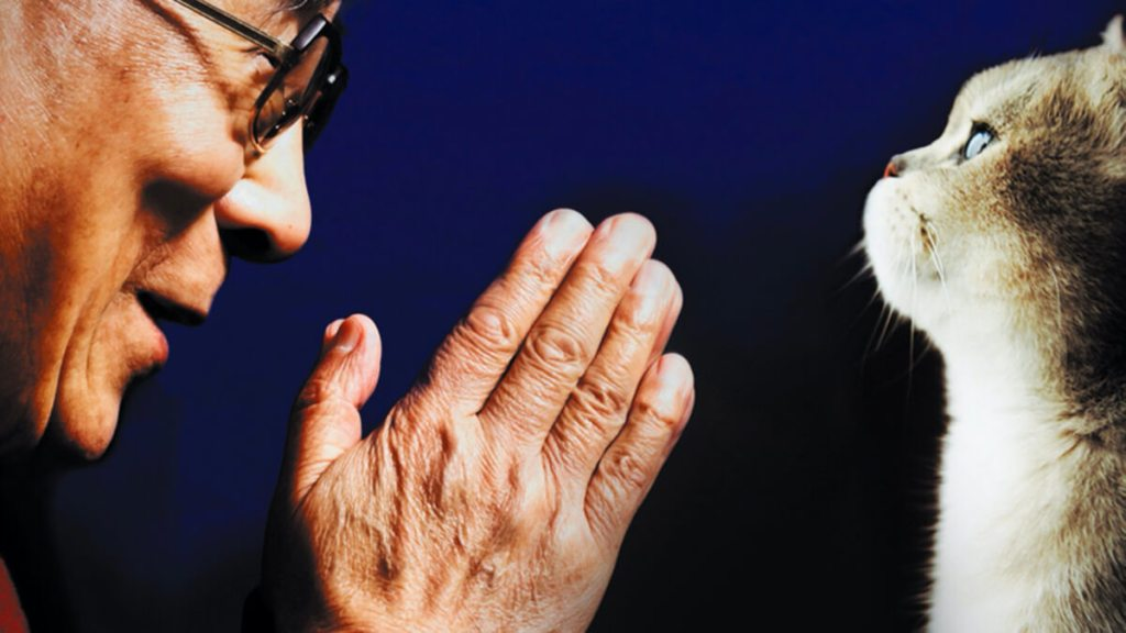 TAKUMI lifestyle - Il gatto del Dalai Lama e l'arte di fare le fusa - cover