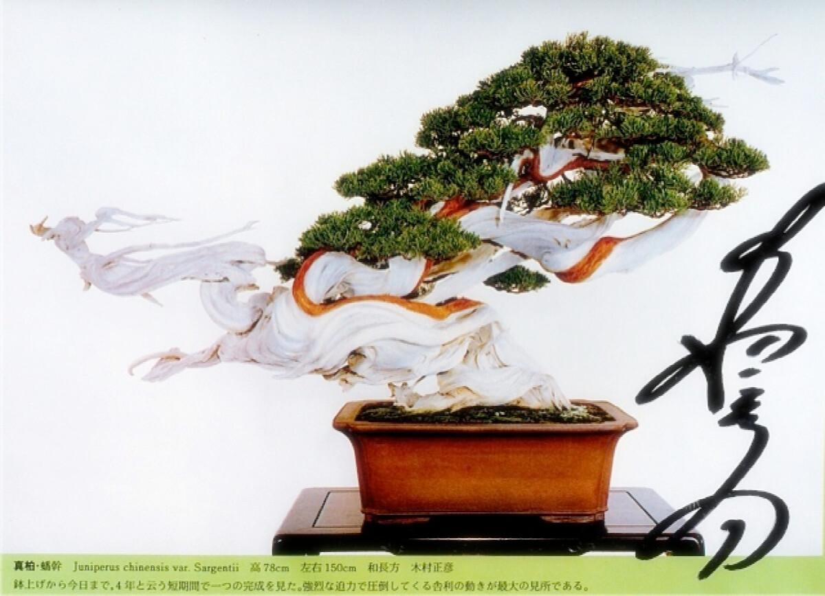 TAKUMI lifestyle - Il bonsai tra arte ed estetica - dragone-danzante - sakufuten