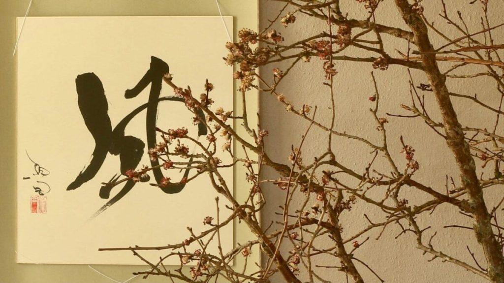 TAKUMI lifestyle - Edoardo Rossi - Il fiore dell_olmo - cover