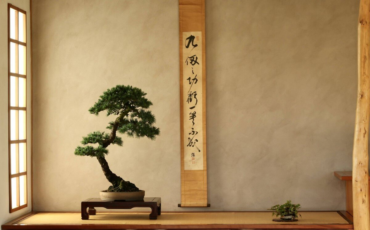 TAKUMI lifestyle - Bonsai olimpici - 1