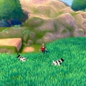 Pokemon-epee-et-bouclier-003
