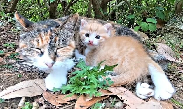 Une chaine YouTube pour ceux qui aiment les chats et le Japon