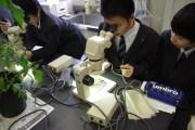 真剣に双眼実体顕微鏡を扱っています