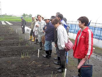 小雨のなか本学農場の野菜を見て回りました。最初はアスパラガスです
