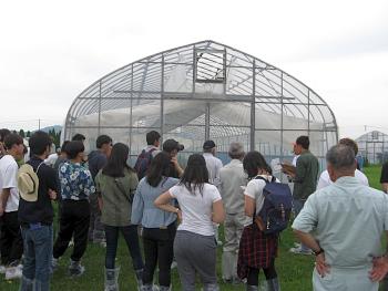 センニチソウなど草花の高温期輸送試験の説明を受けました