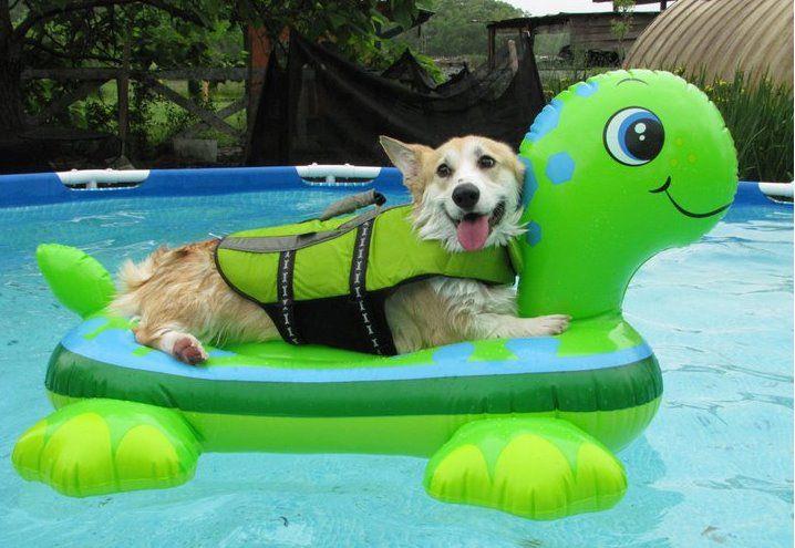 köpek havuz tatil