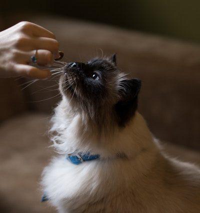 5 Things to Look for in Choosing Cat Food