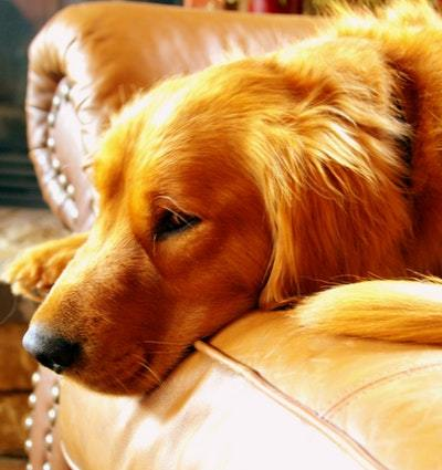 4 Tips for Handling Your Dog When Guests Come Over