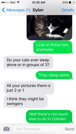 swinger cats.png