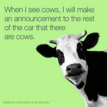 When I see cows