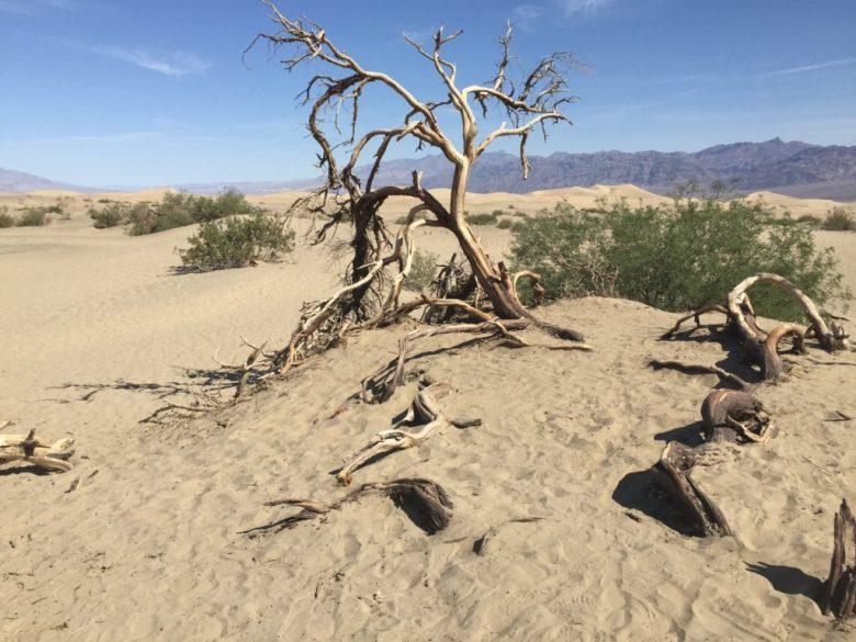 Mesquite Flats, Sand Dunes, California, Death Valley
