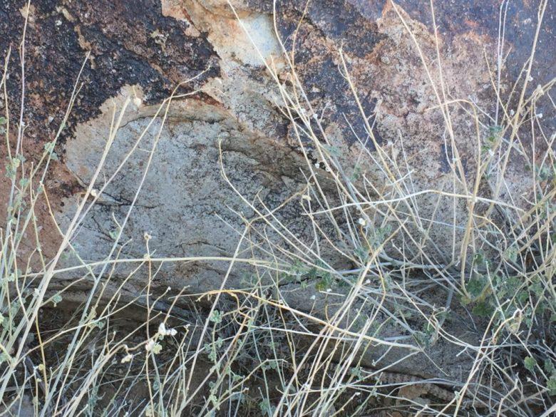 Grapevine Canyon, Nevada, Rock Art, Petroglyphs, Mojave Desert, Rattlesnake