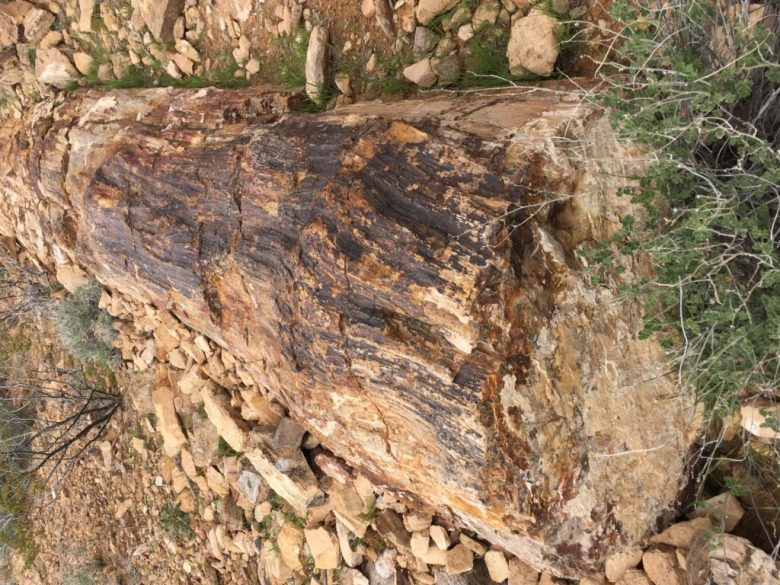 Petrified Logs, Valley of Fire, Nevada, Moapa Valley