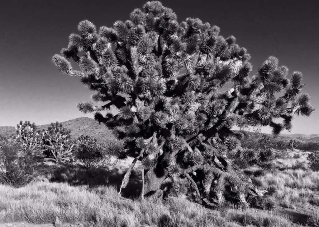 Wee Thump, Nevada, Mojave Desert, Christmas Tree Pass