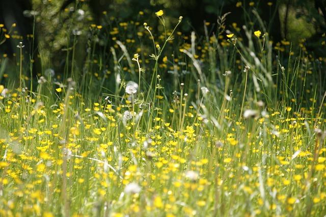 meadow-123280_640