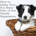 How to Make Your Fur Baby Part of the Family Experience
